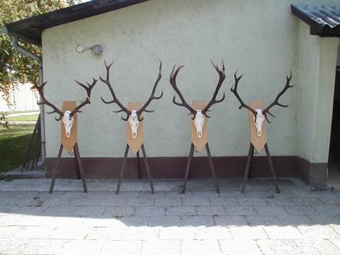 jagd-trophaeen-ungarn1